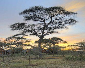 Ndutu Safari Lodge 8 tanzanie ndutu safari lodge13