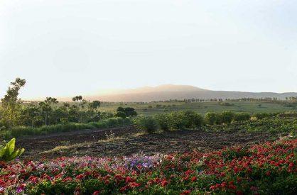Ngorongoro Farmhouse 3