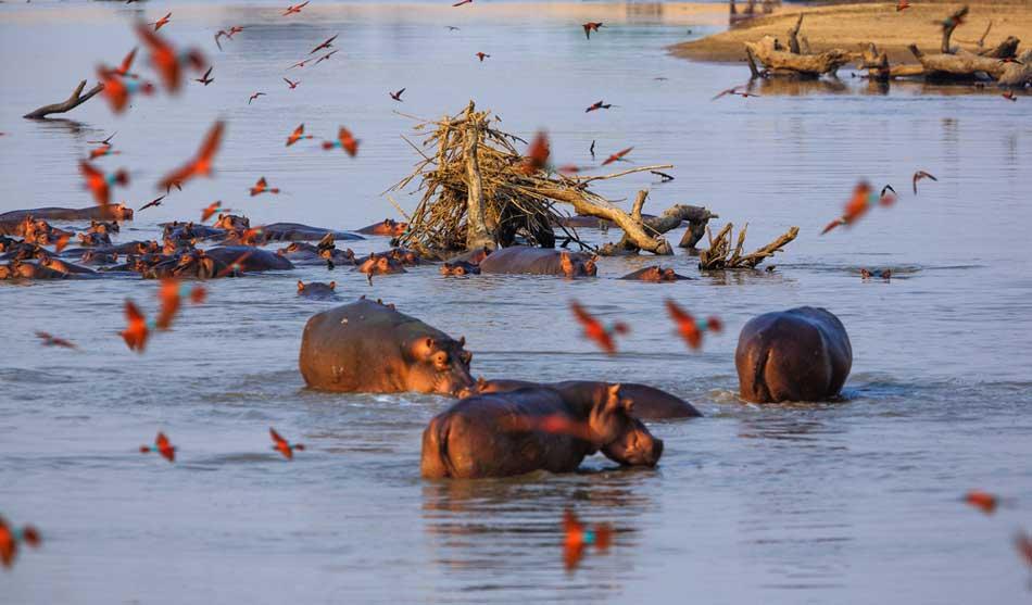 Zambie 3 zambie au fil du zambeze