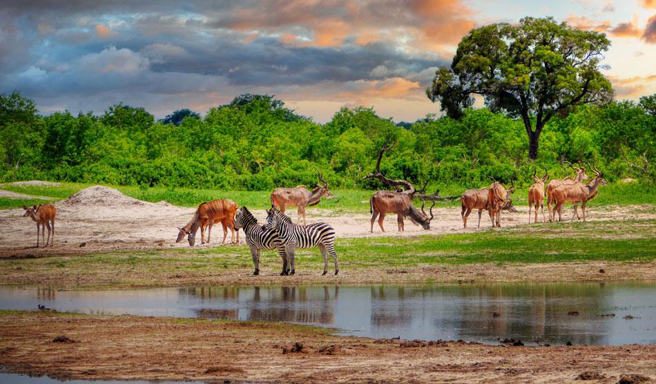 Zimbabwe 3 zimbabwe best of1