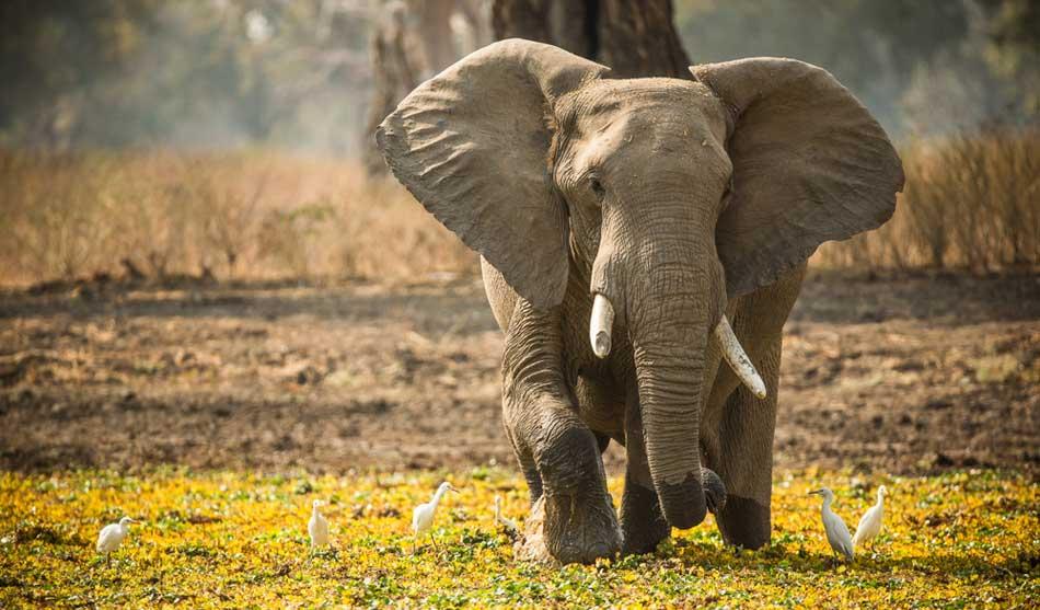 Zimbabwe 2 zimbabwe safari
