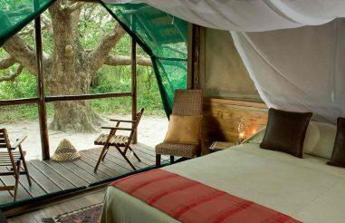 Kosi Forest Lodge 3 afrique du sud kosi forest lodge3 1