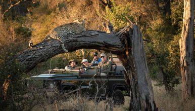 Mala Mala Game Reserve 12 afrique du sud malamala camp8