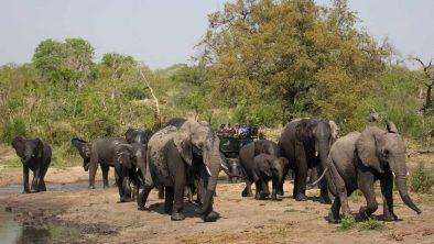 Mala Mala Game Reserve 21 afrique du sud malamala sable camp13