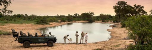 Tanda Tula Safari Camp 1