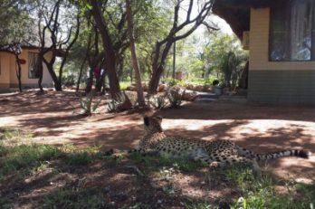 Tshukudu Game Lodge 3 afrique du sud tshukudu game lodge7