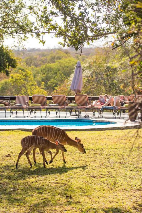 Waterbuck Game Lodge 13