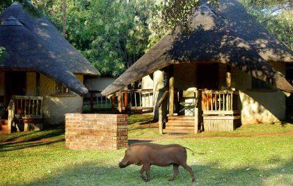 Chobe Safari Lodge 3 botswana chobe safari lodge3
