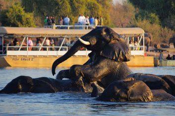 Chobe Safari Lodge 6 botswana chobe safari lodge6