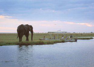 Chobe Safari Lodge 10 botswana chobe safari lodge7