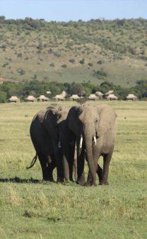 Kichwa Tembo Masai Mara Tented Camp 9 kenya kichwa tembo masai mara tented camp12