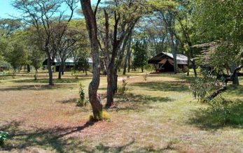 Siana Springs Tented Camp 3 kenya siana springs2