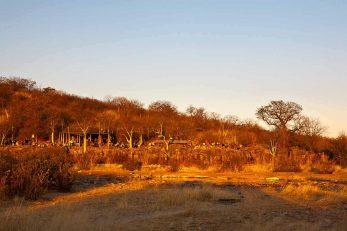Halali Camp 2 namibie halali camp1