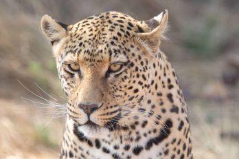N/a'an ku sê Lodge 12 namibie naankuse lodge11