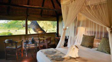Ivory Lodge 7 zimbabwe ivory lodge9