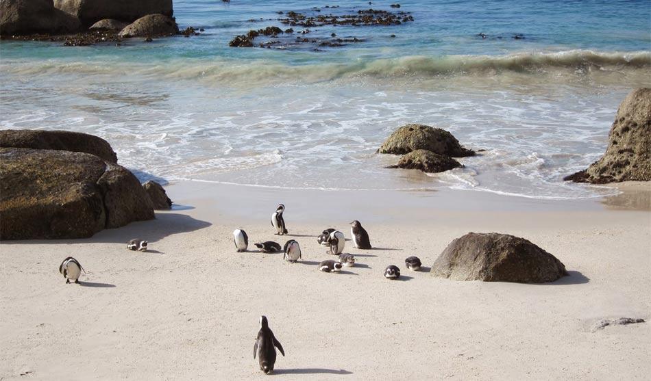 Autotour Afrique du Sud 15 jours 6