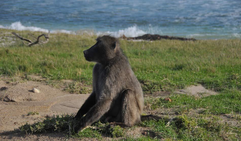 De Cape Town à Kruger 9 afrique du sud de cape town a kruger1