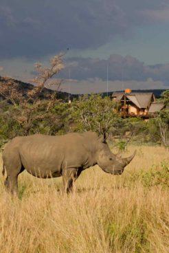 Kololo Game Reserve 16 afrique du sud kololo game reserve17