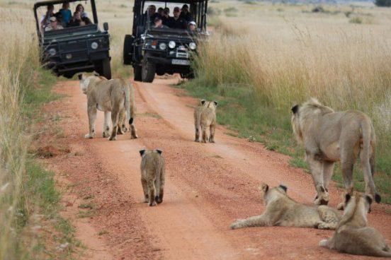 Kololo Game Reserve 18 afrique du sud kololo game reserve18
