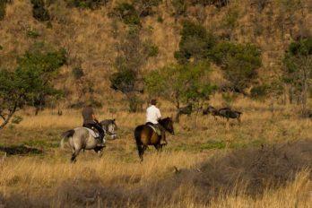 Kololo Game Reserve 10 afrique du sud kololo game reserve19