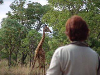 Kololo Game Reserve 4 afrique du sud kololo game reserve3