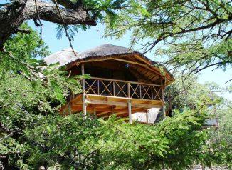 Pezulu Tree House Lodge 6 afrique du sud pezulu tree house lodge6