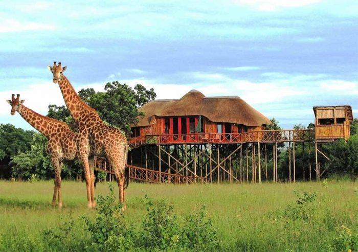 Pezulu Tree House Lodge 1 afrique du sud pezulu tree house lodge7