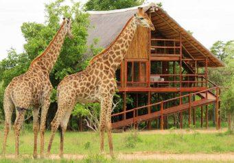 Pezulu Tree House Lodge 7 afrique du sud pezulu tree house lodge8