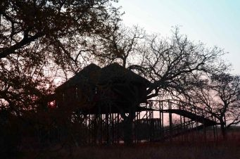 Pezulu Tree House Lodge 8 afrique du sud pezulu tree house lodge9
