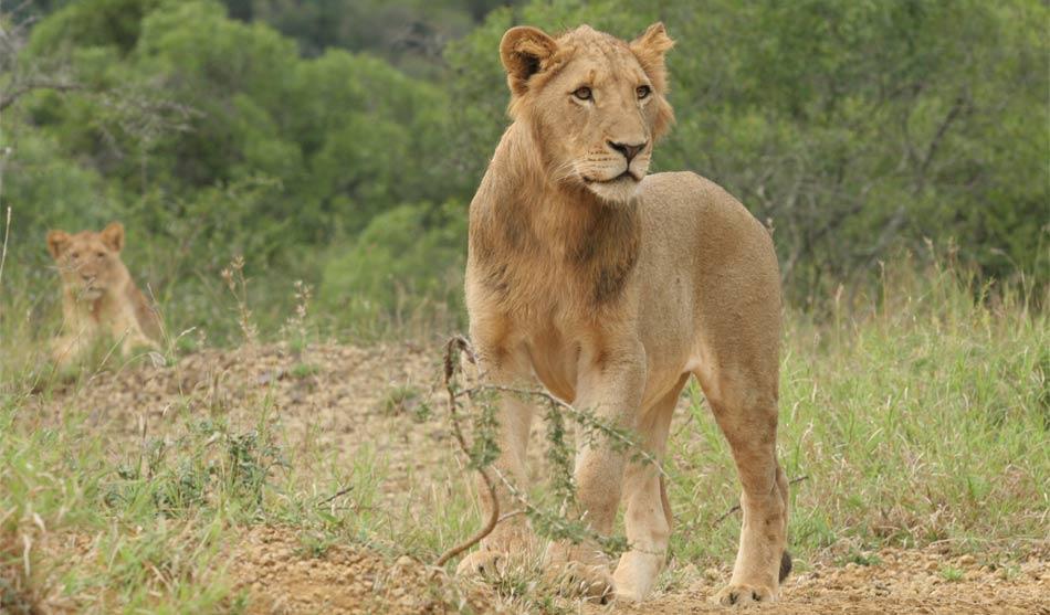 Afrique du Sud Nature 7