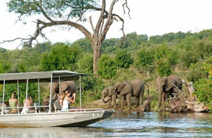 Chobe Chilwero Lodge 11 botswana chobe chilwero lodge1
