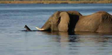 Chobe Elephant Camp 17
