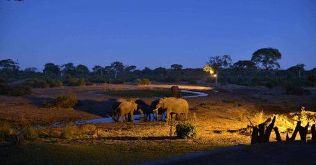 Elephant Valley Lodge 11 botswana elephant valley lodge13