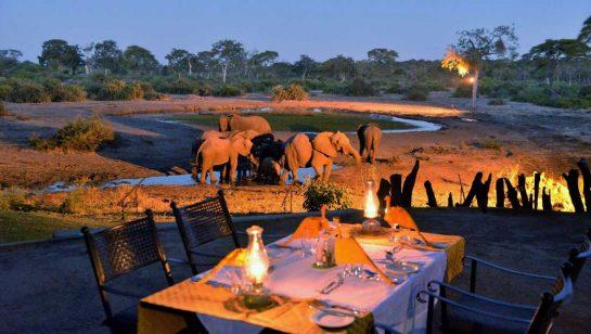 Elephant Valley Lodge 13 botswana elephant valley lodge8