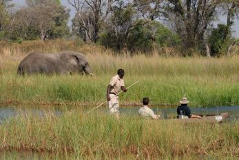Moremi Crossing 11