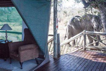 Pom Pom Camp 16 botswana pom pom camp14