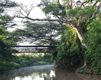 Mara Fig Tree Camp 2 kenya mara fig tree camp1