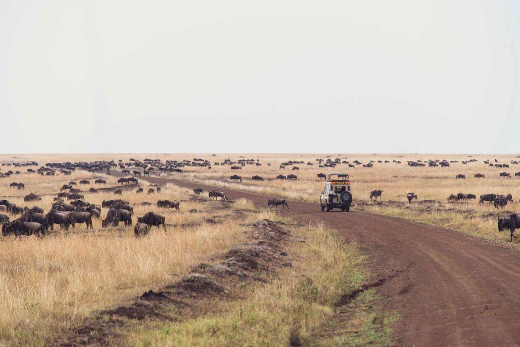 Mara Serena Safari Lodge 16 kenya mara serena safari lodge16