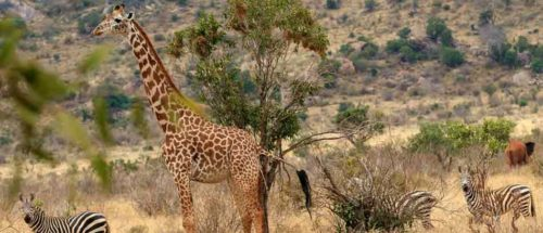 Séjours balnéaires 7 kenya safari plage petite escapade2 1