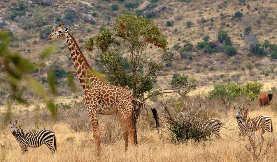 Kenya 6 kenya safari plage petite escapade2 1