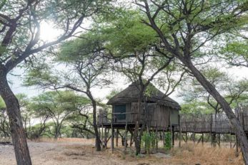 Onguma Tree Top Camp 5
