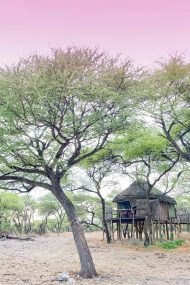 Onguma Tree Top Camp 9