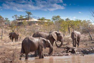 The Elephant Camp 9 zimbabwe the elephant camp9