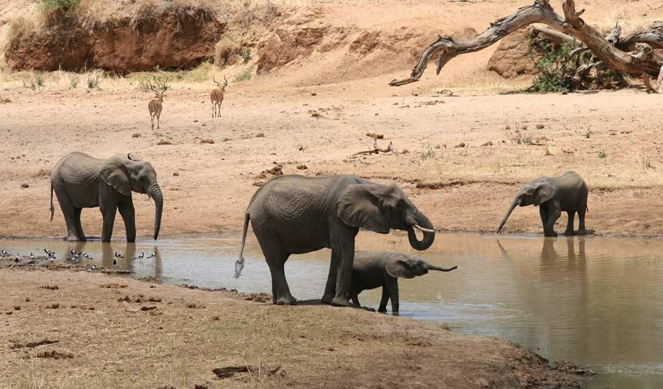 "Kenya -Tanzanie ""Aventure"" 5 kenya tanzanie aventure1"