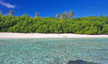 Bird Island 11 seychelles bird island10