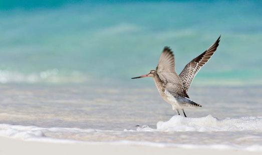 Bird Island 17 seychelles bird island17