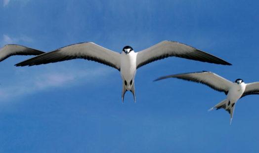 Bird Island 4 seychelles bird island5