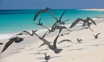 Bird Island 8 seychelles bird island8