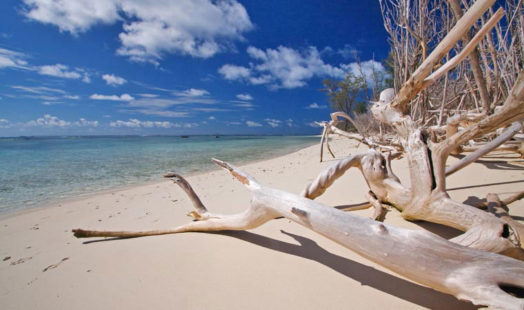 Bird Island 9 seychelles bird island9