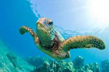 Denis Island 17 seychelles denis island11